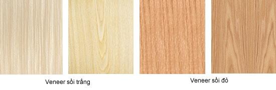 Tìm hiểu về gỗ sồi và veneer gỗ sồi