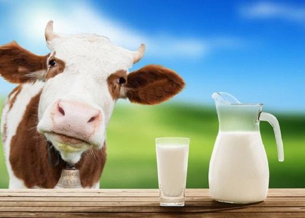 Sữa bò có tác dụng làm sáng bóng đồ nội thất gỗ