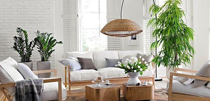 Người mệnh Thổ nên đặt cây gì trong phòng khách để hút tài lộc?
